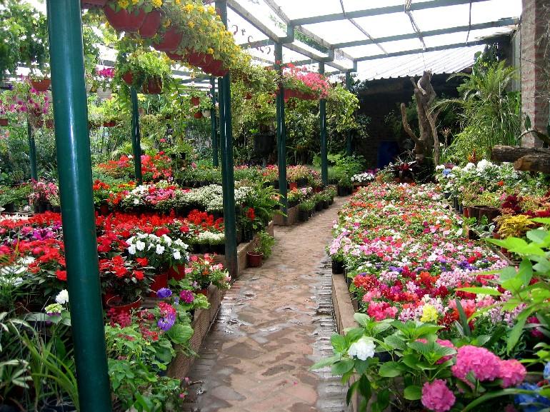 Cesped de argentina jardineria paisajismo especies for Herramientas de un vivero